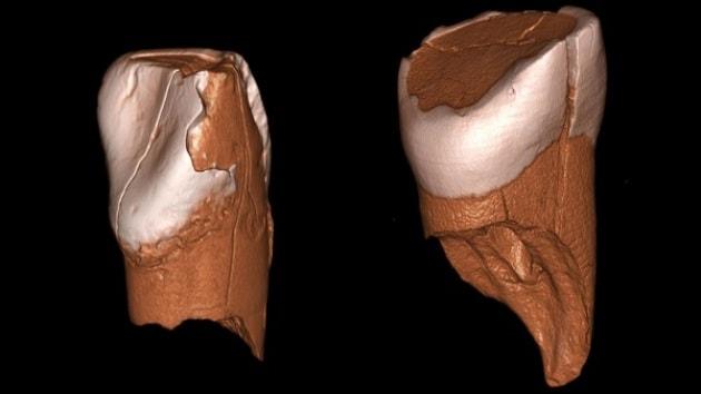 Nuovi indizi sulla fine dei Neanderthal