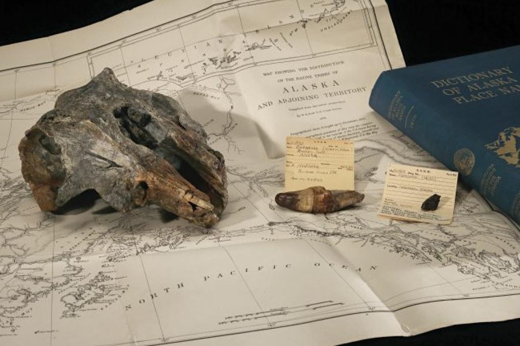 Una nuova specie di delfino (allo Smithsonian)