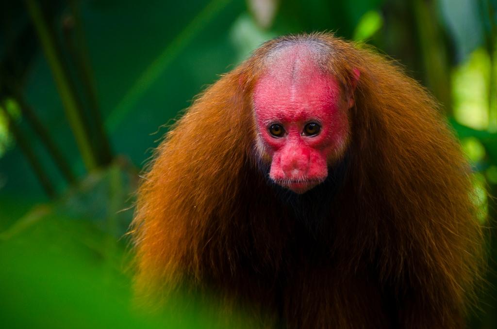 Animali rari gli scienziati si autocensurino - Gli animali della foresta pluviale di daintree ...