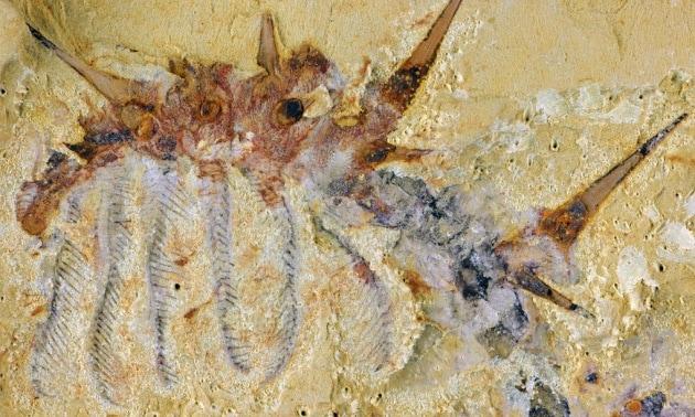Il verme marino preistorico, con l'armatura
