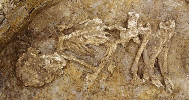 Mummie diffuse nell'Inghilterra dell'Età del Bronzo