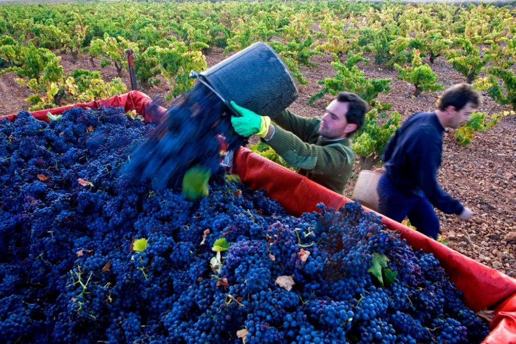 L'ingrediente segreto del vino