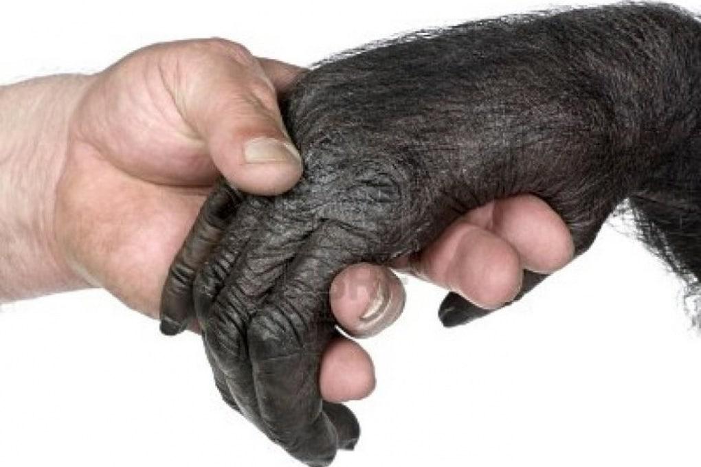 """Le mani dell'uomo sono più """"primitive"""" di quelle degli scimpanzé"""