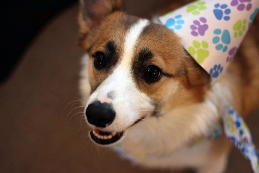 Quanto vale un anno nella vita di un cane?