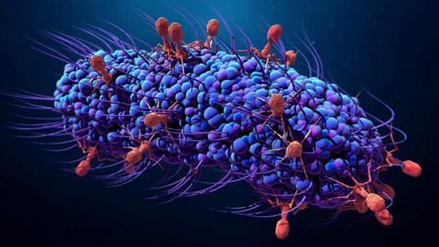 CRISPR e anti-CRISPR: come i virus si alleano contro i batteri