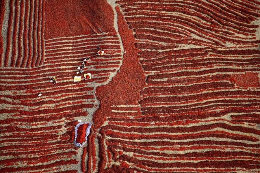 chilli-harvest-china-by-hanbin-wang