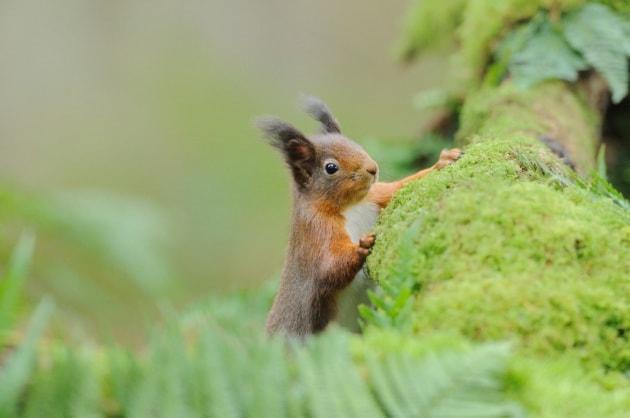 Sorpresa: la lebbra tra gli scoiattoli inglesi