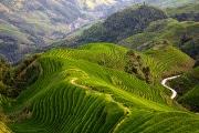 riso-coltivazioni