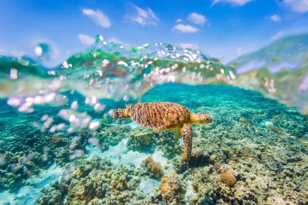 Tartarughe marine: il riscaldamento globale le fa femmine