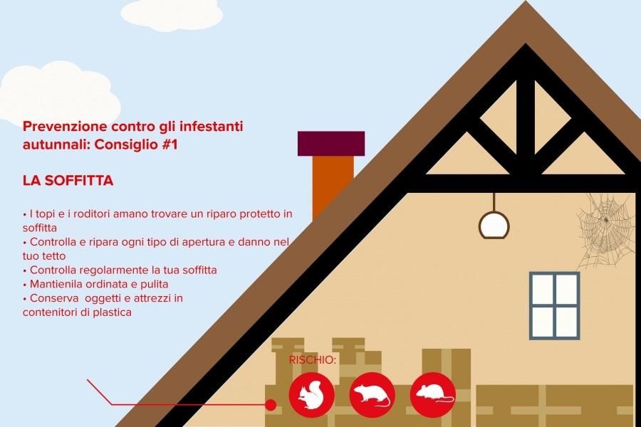 Come proteggere la tua casa da insetti e altri ospiti for Come costruire la tua casa