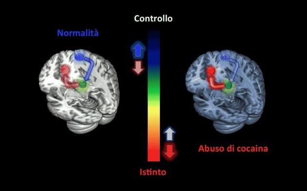 Uso di cocaina: produce una alterazione cerebrale, forse alla base del rischio di ricaduta