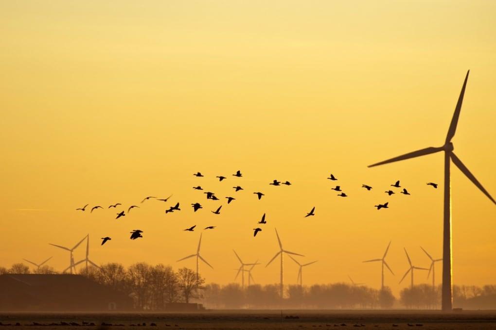 Le pale eoliche sono davvero pericolose per gli uccelli?