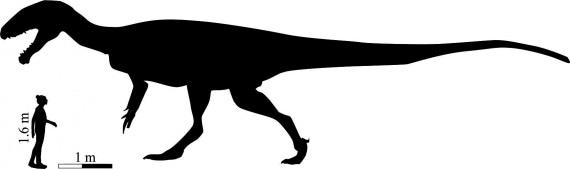 dinosauri, fossili, archeologia, paleontologia, Kayentapus ambrokholohali, teropodi