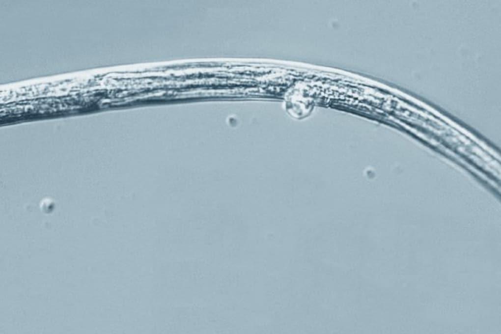 Vermi congelati si svegliano dopo 40.000 anni
