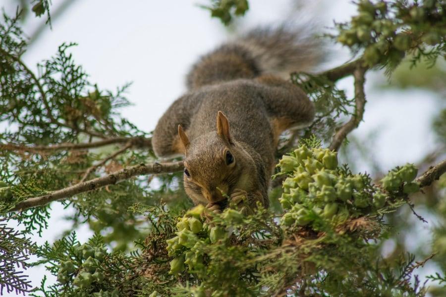 scoiattoli-a-torino_andrea-gandino