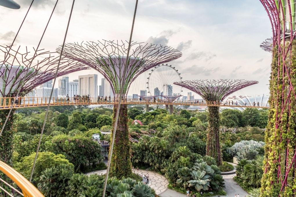 In città gli alberi crescono più velocemente che non in campagna