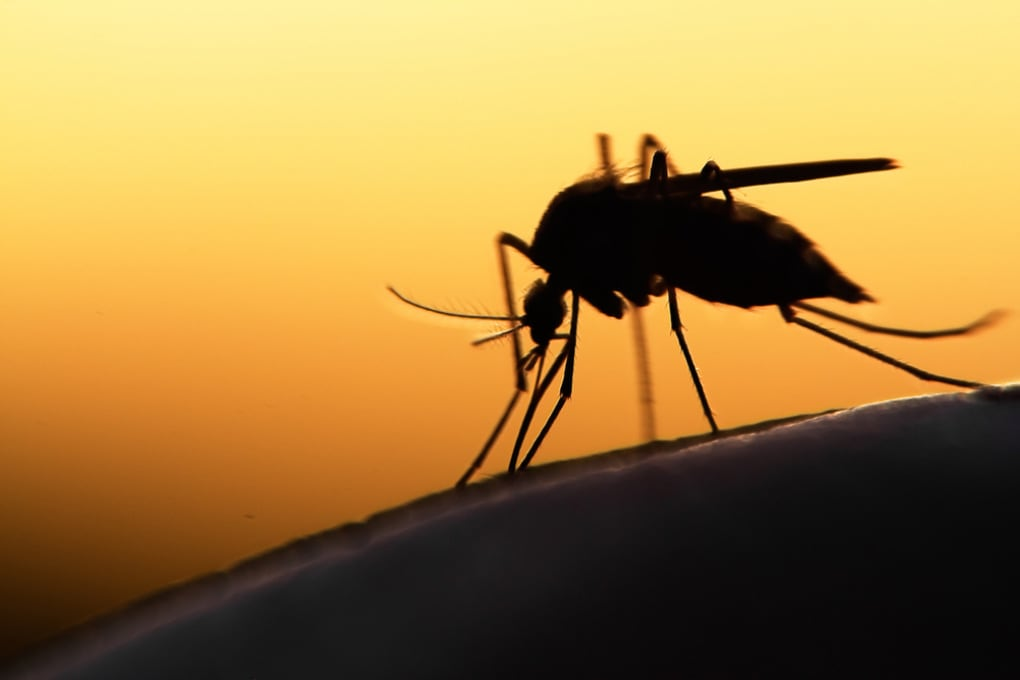 Le siringhe indolori del futuro imiteranno le punture delle zanzare
