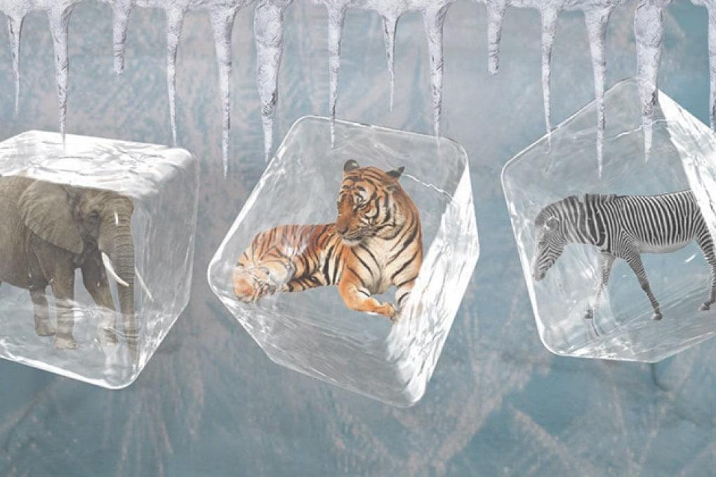 Zoo congelati per tutelare la biodiversità
