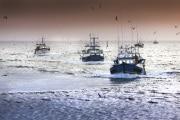 pescherecci