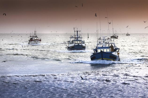 Quanta parte dei mari è interessata dalla pesca?