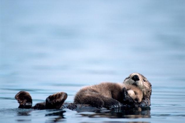 9 cose che (forse) non sai sul sonno animale
