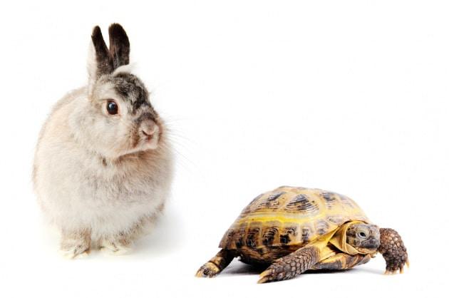 Nell'arco della vita, la tartaruga batte sempre la lepre