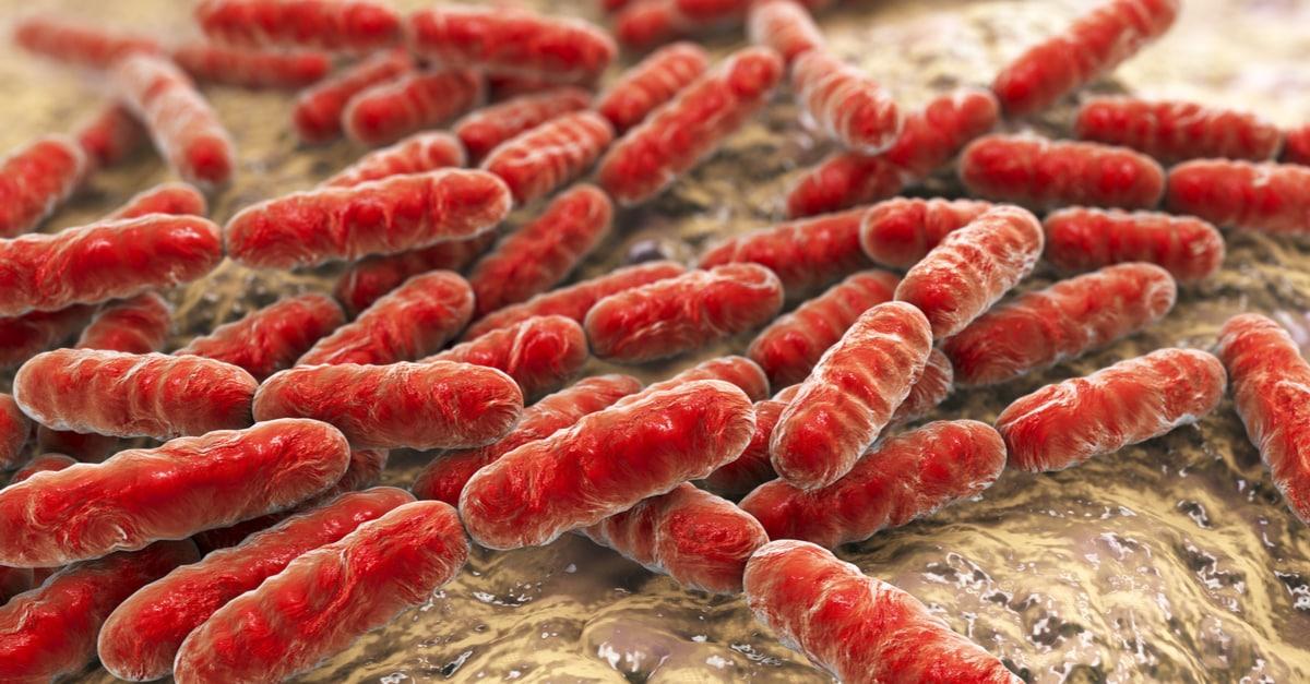 Risultati immagini per pre probiotici