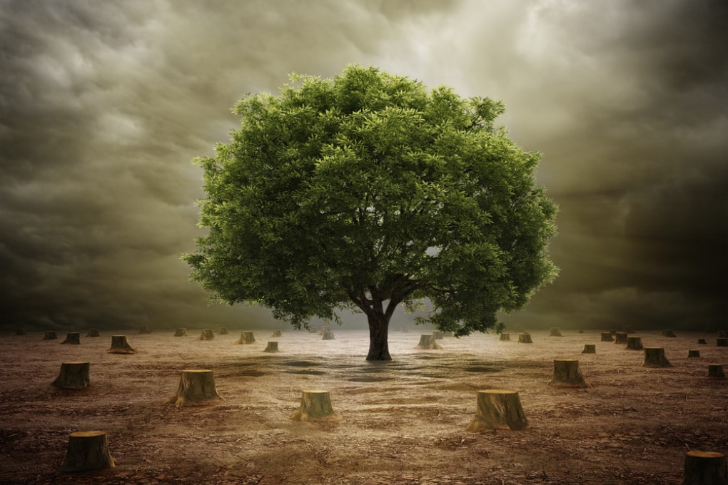 Earth Overshoot Day: dal 1 agosto siamo in debito con la Terra