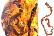 prehistoric-snake-amber-1