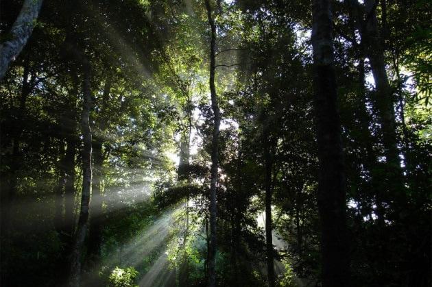 Un terzo delle aree naturali protette minacciato dall'uomo