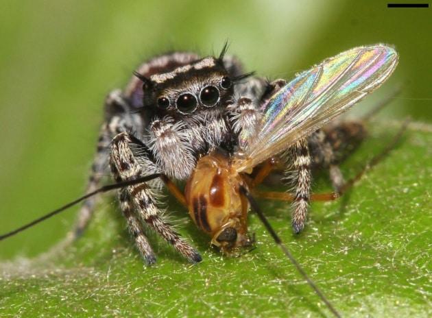 spiderseat40