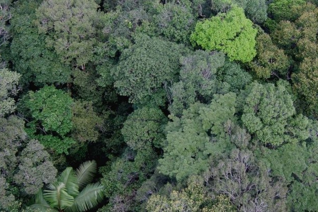 60.065 specie di alberi sulla Terra, e ancora non le abbiamo contate tutte