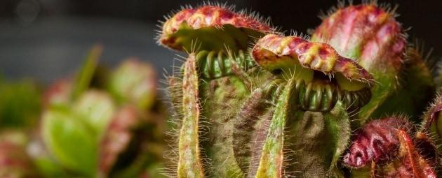 L'appetito delle piante carnivore per gli insetti