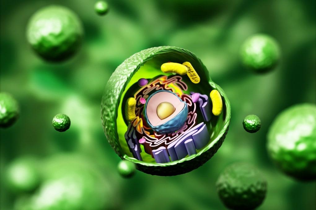 Il censimento delle proteine in una singola cellula