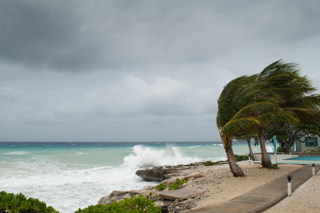 Come fanno le palme a resistere agli uragani?