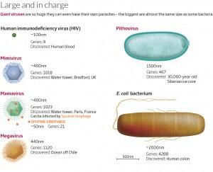 virus, virus giganti, batteri, microrganismi