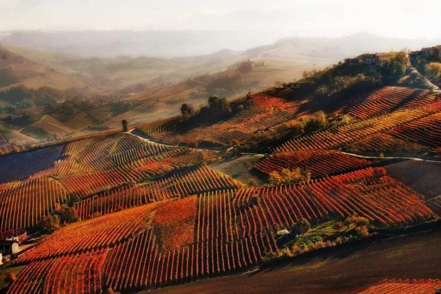 red-mist-in-alba-by-valentina-galvagno