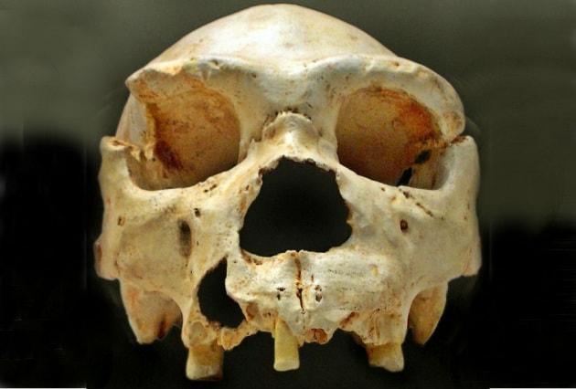 L'antenato misterioso dei sapiens