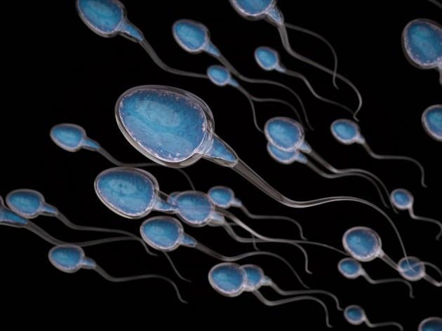 La conta spermatica in Occidente si è dimezzata