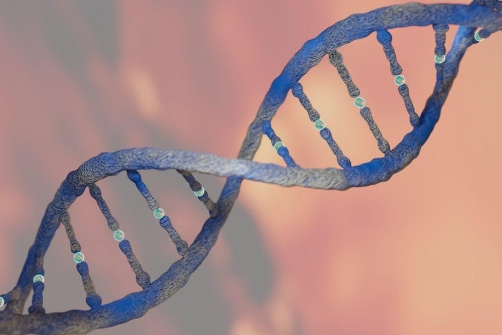 Due adattamenti della tecnica CRISPR permettono riparazioni