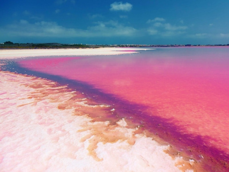 near-the-city-of-torrevieja-in-spain-lie-two-salty-and-very-pink-lakes-called-las-salinas-de-torrevieja-the-color-is-said-to-be-caused-by-algae-that-releases-a-red-pigment-under-certain-conditions