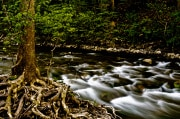 Le piante trovano l'acqua ascoltando le vibrazioni
