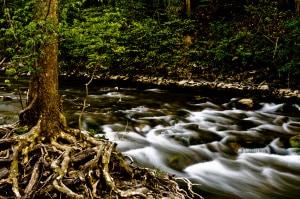 suono, acqua, piante