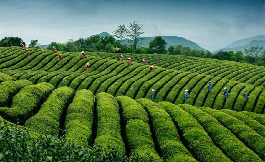 ripples-in-tea-china-by-hong-ding
