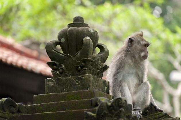 La mafia delle scimmie