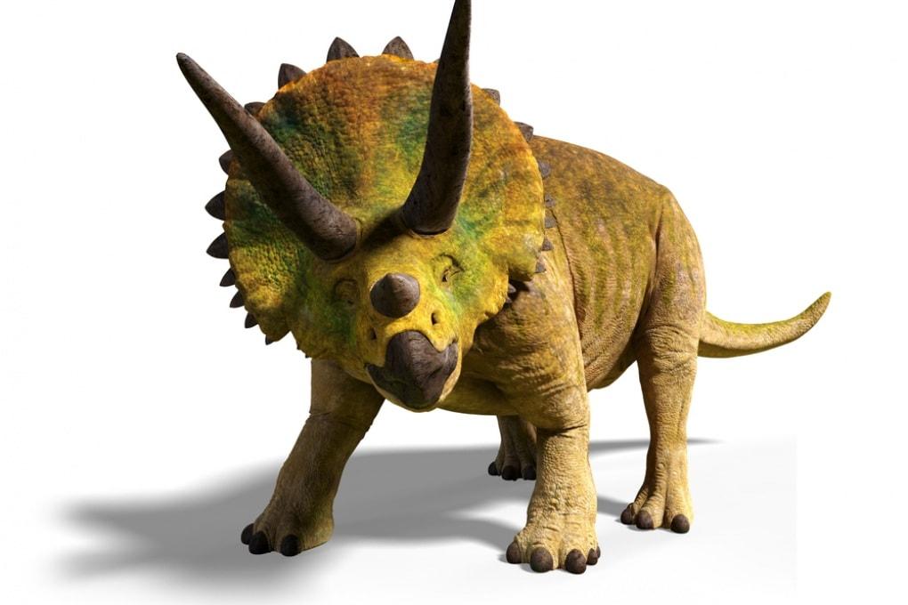 Corna e collare del triceratopo: a che cosa servivano?