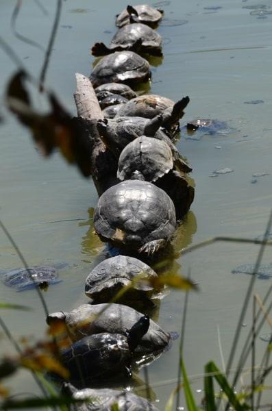 Il paese delle meraviglie for Laghetto tartarughe inverno