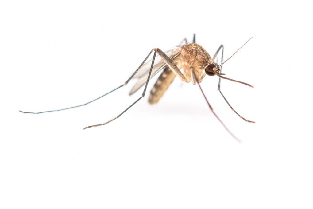 Quando è nato il primo parassita della malaria?