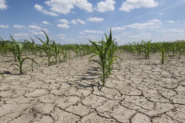 Alimentazione e cambiamenti climatici