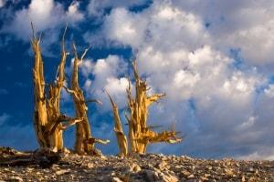 global warming, piante, alberi, cambiamenti climatici, clima, limite degli alberi